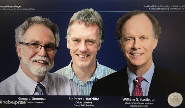 برندگان جایزه نوبل پزشکی 2019 معرفی شدند